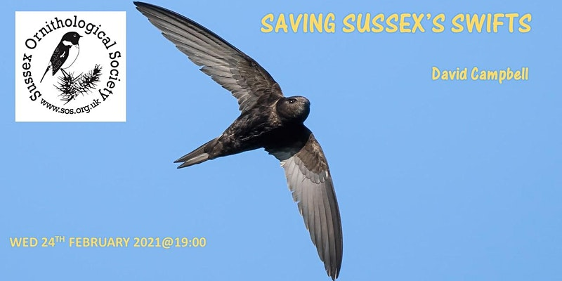 Sussex Ornithological Society: Saving Sussex's Swifts