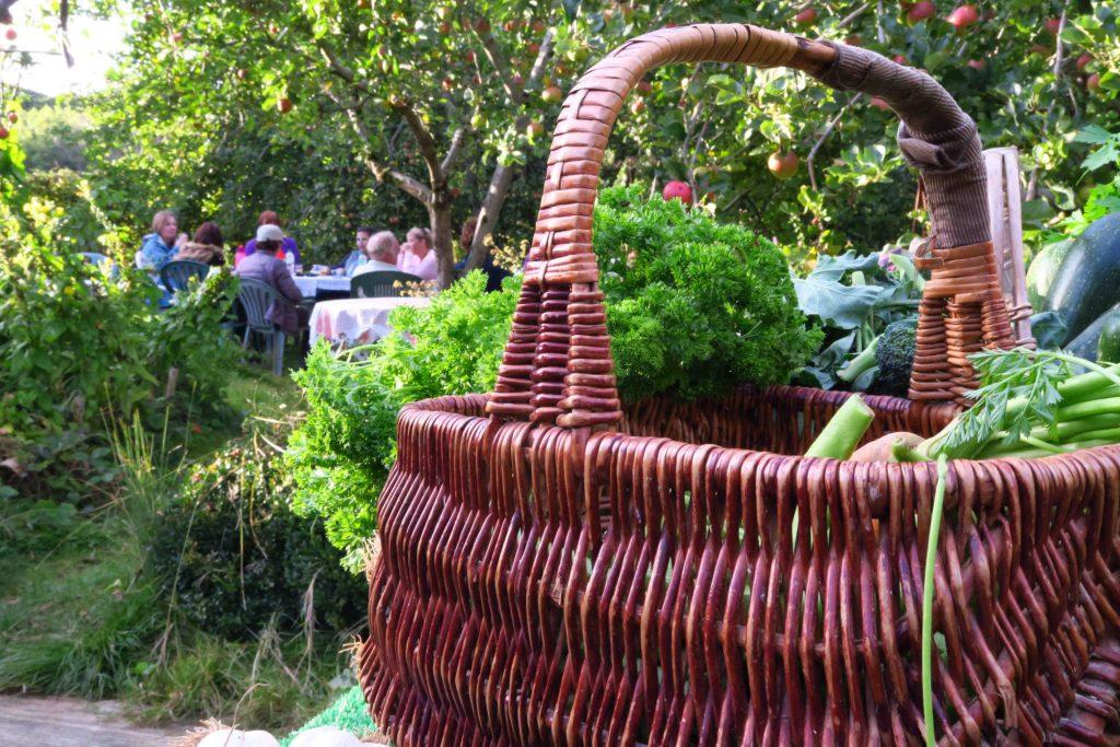 basket in orchard after walk