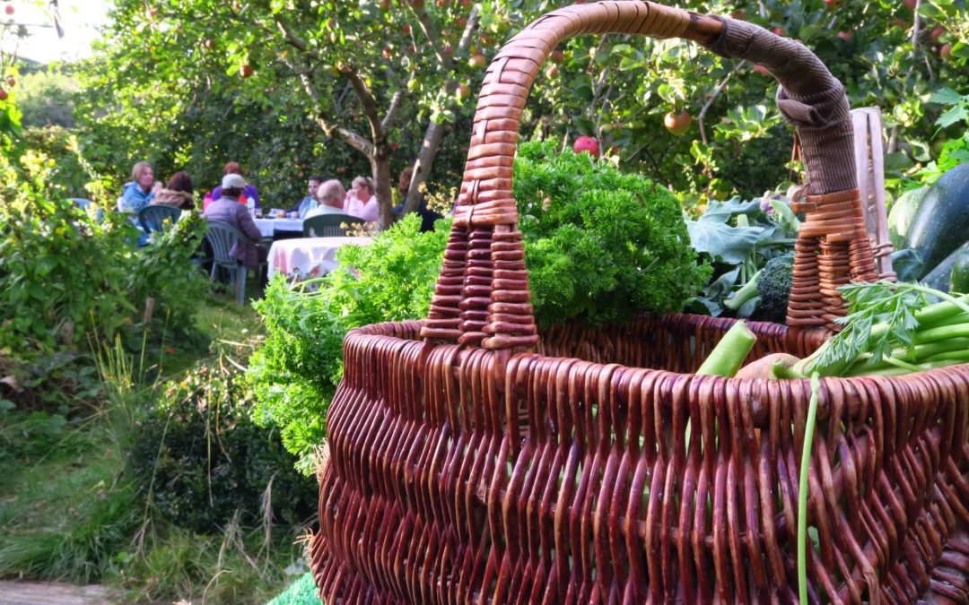 Grow Your Own Vegetables at Daylands Farm – 12 monthly sessions. Starting online & then on farm