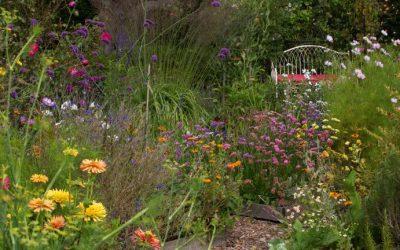 Wildlife Gardening – 'Donate' 3m of your garden to wildlife